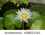 close up. the lotus has many... | Shutterstock . vector #638021161