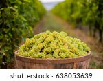 Baskets Of Grapes On A Vine In...