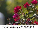 red roses on golden sunshine | Shutterstock . vector #638063497