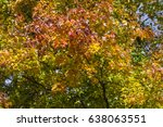 colorful fall leaves | Shutterstock . vector #638063551