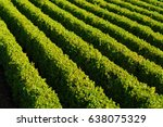 hedges in a row | Shutterstock . vector #638075329