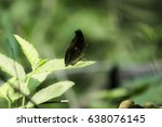 Small photo of Brown butterfly adhere on grass.