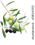 olive branch | Shutterstock . vector #63814192