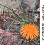 Small photo of Small flower amiss rocks