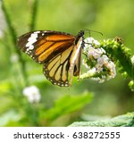 common name  indian eastern... | Shutterstock . vector #638272555