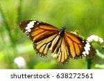 common name  indian eastern... | Shutterstock . vector #638272561