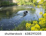 Small photo of Car In The River Dearne, Wath Upon Dearne, Rotherham, South Yorkshire, England