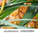 date palm tree | Shutterstock . vector #638303884