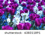 beautiful pink tulip with white ... | Shutterstock . vector #638311891