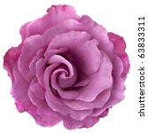 Beautiful Lavender Hued Rose ...