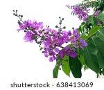 Pink   Purple Flower   Giant...