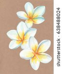 plumeria watercolor craft paper | Shutterstock . vector #638488024