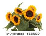 bunch of lovely sunflowers... | Shutterstock . vector #6385030