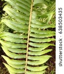 green fern close up | Shutterstock . vector #638503435