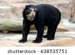 spectacled bear or andean bear... | Shutterstock . vector #638535751
