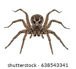 wolf spider   high detailed... | Shutterstock .eps vector #638543341