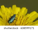 Beetle On A Yellow Flower