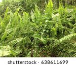 many fern | Shutterstock . vector #638611699