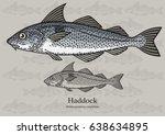 haddock  offshore hake. vector... | Shutterstock .eps vector #638634895
