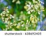 Small photo of Arugula flower. Rucola blossom. Eruca lativa plant. Farmland arugula. Rocket salad. Food spice and herbs. Spring garden in countryside. Organic agriculture in village. Springtime retro photo.