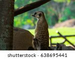 meercat are sitting vacant. | Shutterstock . vector #638695441