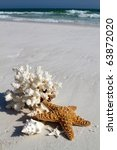 Collection Of Shells  Coral An...