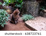 Curious Cat  In The Tropical...