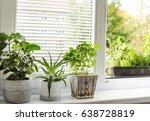 indoor window garden  | Shutterstock . vector #638728819