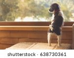 Stock photo cute puppy standing on couch of living room looking out the window to trees expectant waiting 638730361