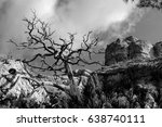 trees hanging on the rock  | Shutterstock . vector #638740111
