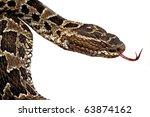 Постер, плакат: poisonous snake fer de