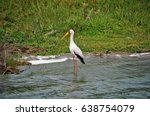 yellow billed stork in the... | Shutterstock . vector #638754079