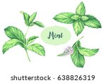 watercolor mint collection.... | Shutterstock . vector #638826319