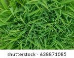 closeup nature view of green... | Shutterstock . vector #638871085
