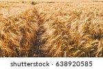a barley corn field in germany... | Shutterstock . vector #638920585