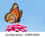 Brilliant Viceroy Butterfly...