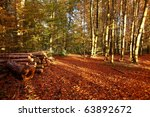 autumn scene in late afternoon... | Shutterstock . vector #63892672