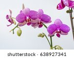pink phalaenopsis orchid   Shutterstock . vector #638927341