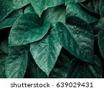 Abstract Dark Green Of Tropica...