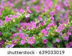 flower   bee | Shutterstock . vector #639033019