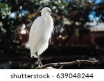 white bird | Shutterstock . vector #639048244