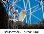 white bird | Shutterstock . vector #639048301