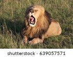 The Lion Yawns