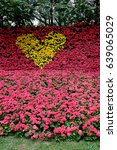 The Arrangement Of Begonia...