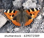 Butterfly   Aglais Urticae