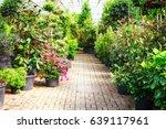 green house with flowerpots of... | Shutterstock . vector #639117961