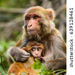 Monkey With Baby Portrait....