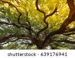 big tree sun shine   Shutterstock . vector #639176941
