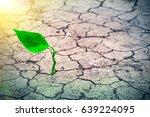 small tree breaks through the... | Shutterstock . vector #639224095