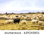farmers are herding sheep at... | Shutterstock . vector #639245851